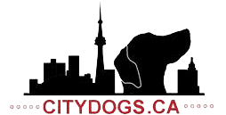 City Dogs | Dog Training Toronto, ON