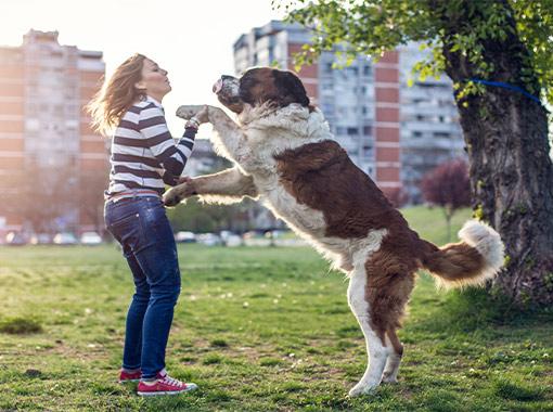 Greeting Disorders - City Dogs Toronto